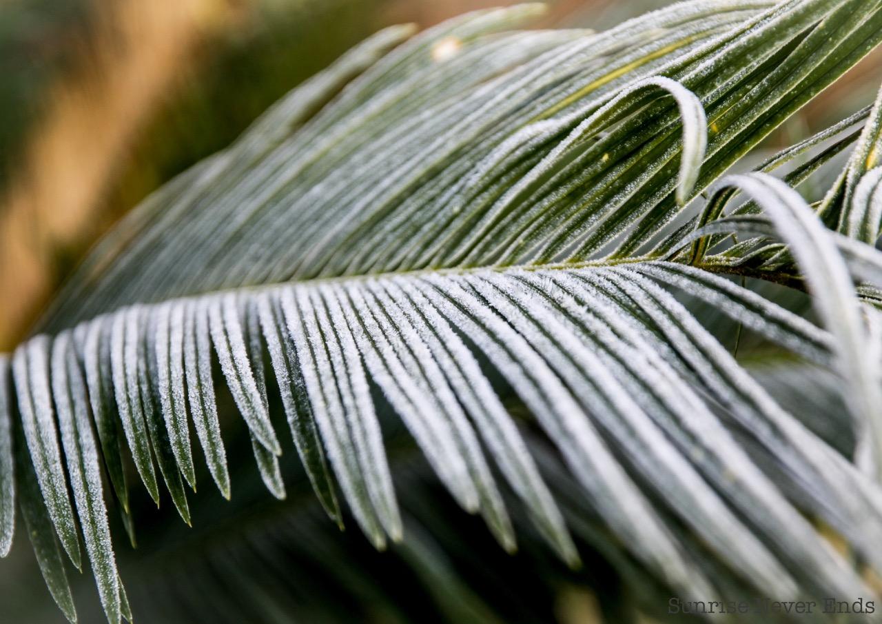 frozen palm,nature,plantes,hiver,hossegor,givre,home sweet home,villa la bohème